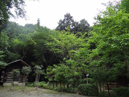 洛西散策の森