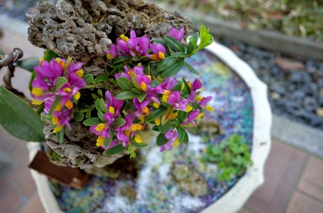 和の花展示