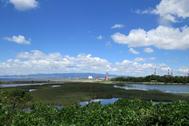 野鳥園臨港
