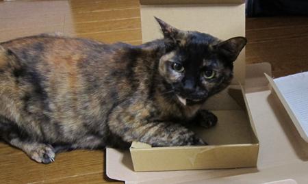 小さすぎる箱