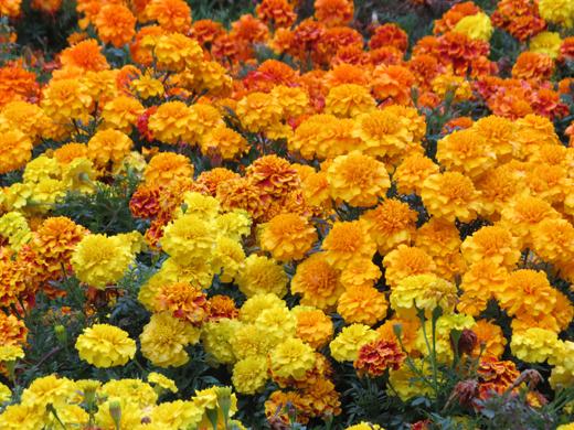 FBのカバー写真にもした花