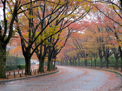 植物園前の紅葉