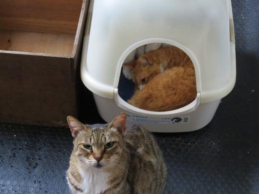 猫用カプセルホテル