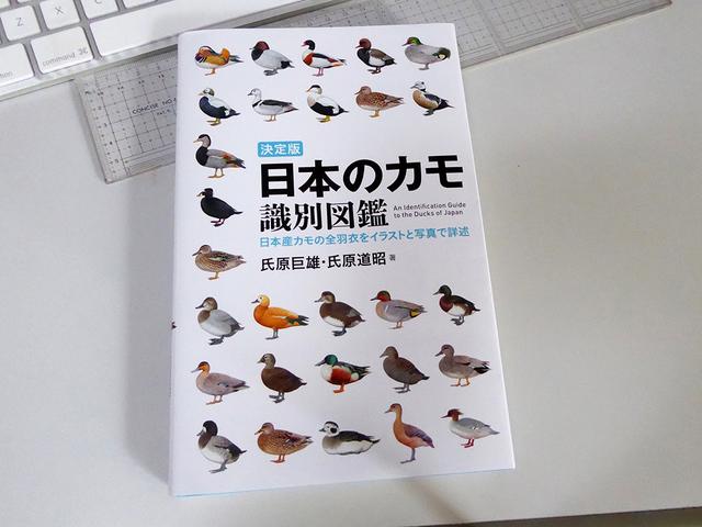 日本のカモ 識別図鑑